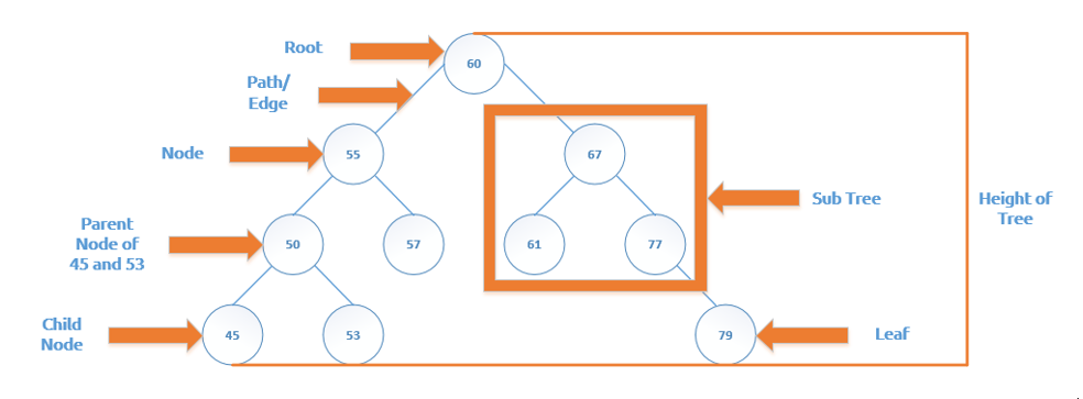 Binary Tree Glossary
